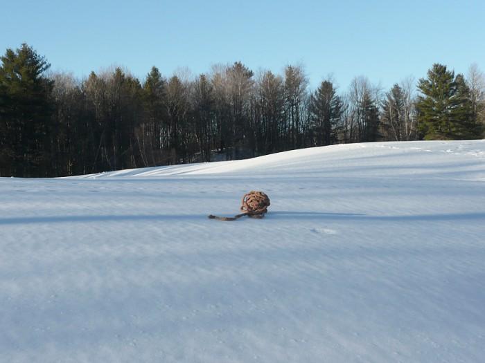 braidballs in snow15
